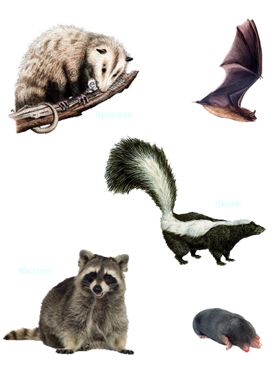 Types of Rodent